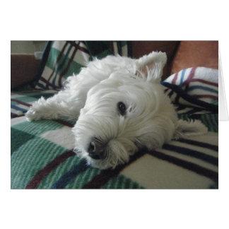 眠いソファーのWestieの写真の挨拶状 グリーティングカード