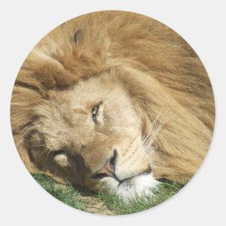 眠いライオン ラウンドシール
