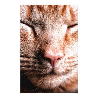 眠い子ネコ 便箋