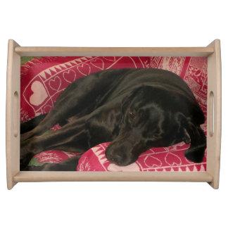 眠い犬のトレイ トレー