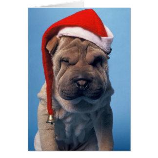眠いShar Pei X mas Chrstmas犬 カード