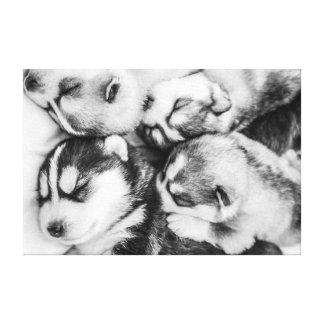 眠りのハスキーな子犬 キャンバスプリント
