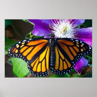 眩ます蝶ポスター ポスター