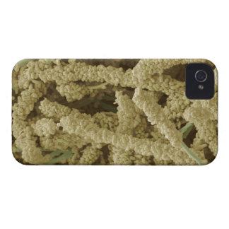 着色される細菌のプラク形成2つをスキャンすること Case-Mate iPhone 4 ケース