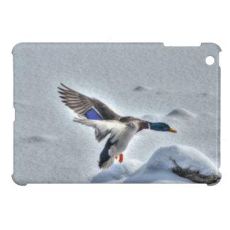 着陸のマガモのアヒルのドレーク5の野性生物の写真 iPad MINIケース