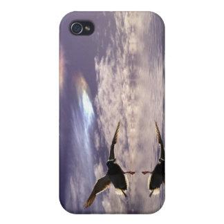 着陸のマガモのアヒルの野性生物の恋人のiPhoneの場合 iPhone 4 Case