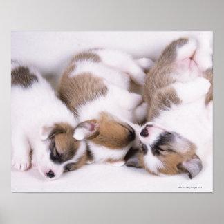睡眠のウェルシュコーギーの子犬 ポスター