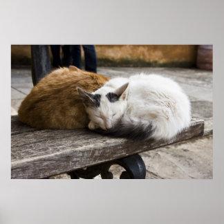 睡眠のクレタ猫 ポスター