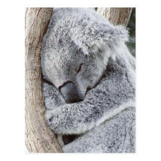 睡眠のコアラのベビー ポストカード