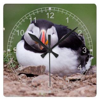 睡眠のツノメドリ スクエア壁時計