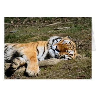 睡眠のトラ カード