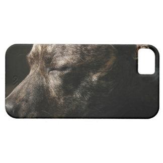 睡眠のピット・ブル犬 iPhone 5 ケース