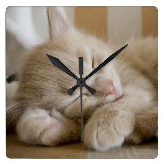 睡眠の子ネコ スクエア壁時計