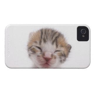 睡眠の子ネコ、頭部のクローズアップ Case-Mate iPhone 4 ケース