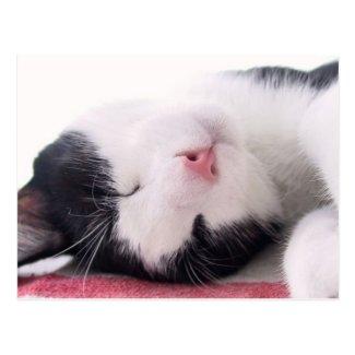 睡眠の子猫 はがき