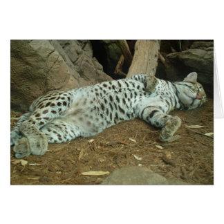 睡眠の子猫 カード