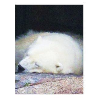 睡眠の白くま ポストカード