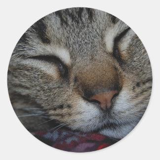 睡眠の虎猫のステッカー ラウンドシール