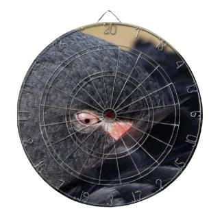 睡眠の黒鳥(白鳥座のatratus)の詳細 ダーツボード