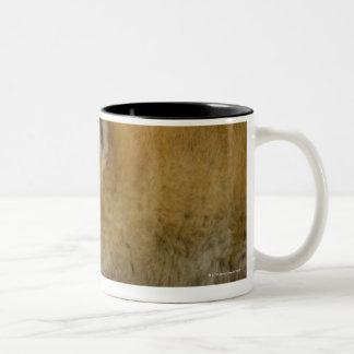 睡眠のShibaケン2 ツートーンマグカップ