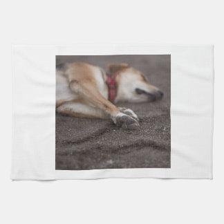 睡眠犬タオル キッチンタオル