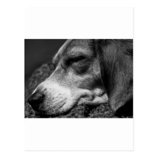 睡眠犬 ポストカード