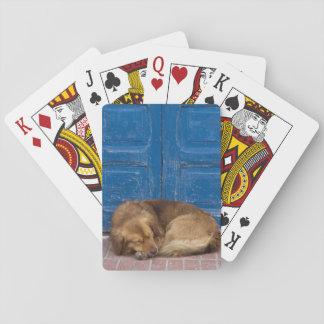 睡眠犬、Essaouira、モロッコ トランプ