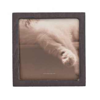 睡眠猫 ギフトボックス