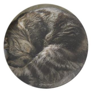 睡眠猫 プレート