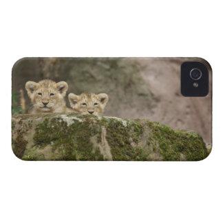石にかいま見るライオンの子 Case-Mate iPhone 4 ケース