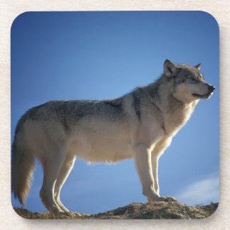 石のオオカミ コースター