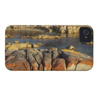 石のオレンジ地衣、Binalong湾、湾の Case-Mate iPhone 4 ケース