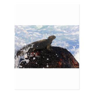 石のガラパゴス諸島のウミイグアナ ポストカード
