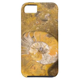 石のクローズアップの写真の化石から成っている切り分けられたボール iPhone SE/5/5s ケース