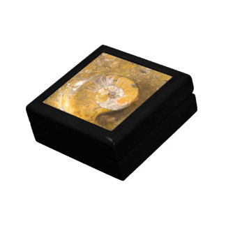 石のクローズアップの写真の化石化されたアンモナイト ギフトボックス