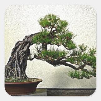 石のマツ盆栽の木上の根 スクエアシール
