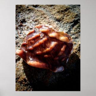 石のラグナの海の貝 ポスター