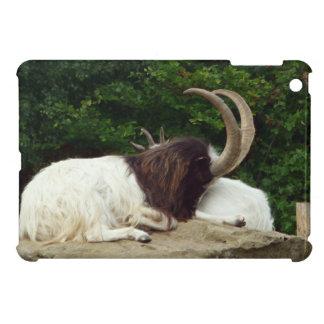 石の写真のBagotの休息のヤギ iPad Miniカバー