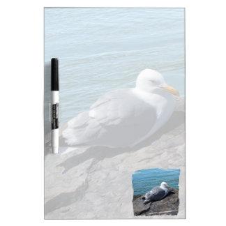 石の突堤で休んでいるセグロカモメ: ホワイトボード