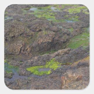 石の緑藻類そして潮プール スクエアシール