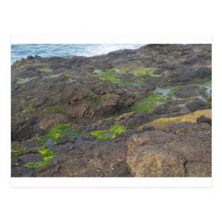 石の緑藻類そして潮プール ポストカード