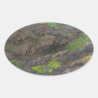石の緑藻類そして潮プール 楕円形シール