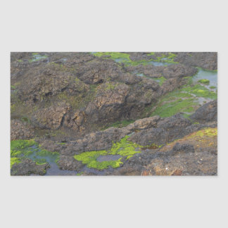 石の緑藻類そして潮プール 長方形シール
