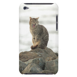 石のipod touchの穹窖の箱のあくびをする猫 Case-Mate iPod touch ケース