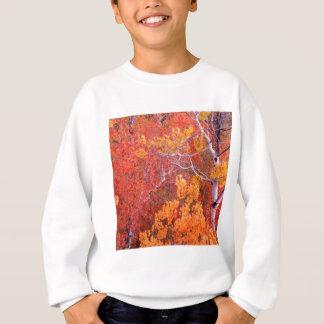 石アイダホの秋の《植物》アスペンの木都市 スウェットシャツ