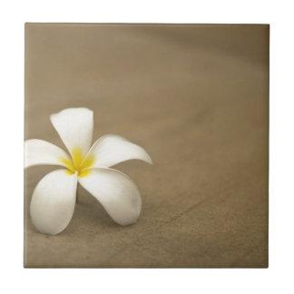 石造りの背景の白い花 タイル