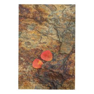 石、カリフォルニアの秋の葉 ウッドウォールアート