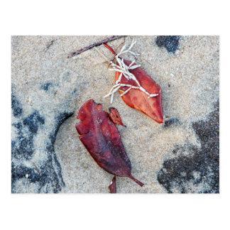 砂の挨拶状のコラリンの藻そして葉 ポストカード