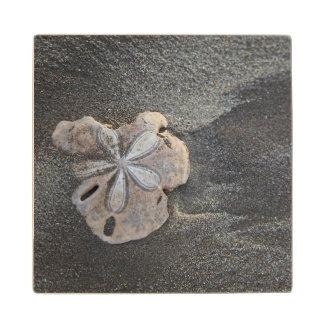 砂の砂ドル ウッドコースター