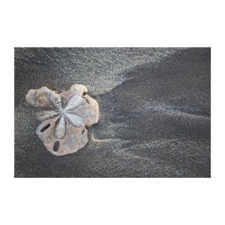 砂の砂ドル キャンバスプリント
